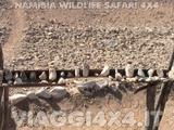VIAGGI 4X4 IN NAMIBIA